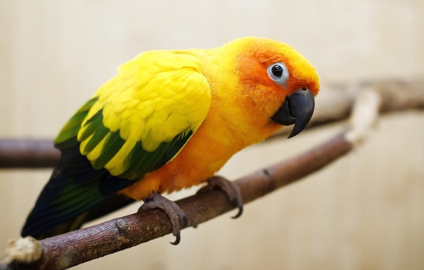 Picture eyes, bird, branch, Parrot