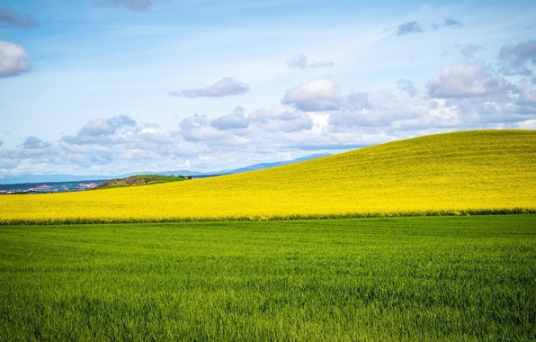 Image result for big green field horizon