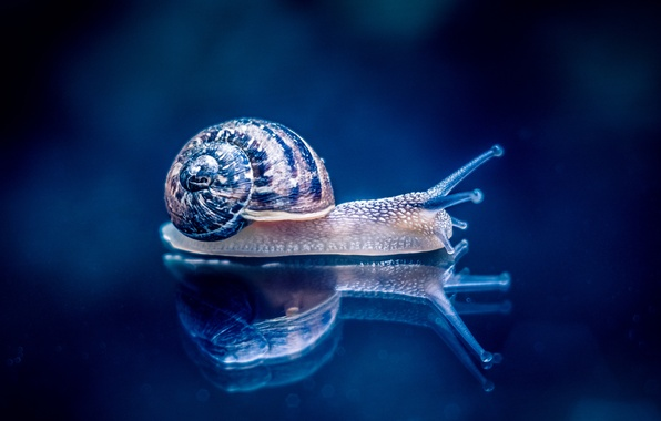 Picture macro, reflection, background, snail