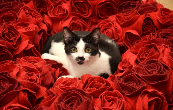 Picture cat, look, flowers, roses
