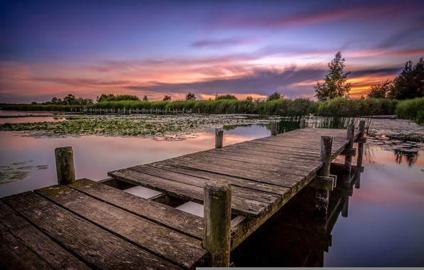 Picture forest, lake, pond, morning, the bridge