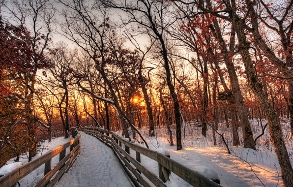 Picture winter, forest, the sky, the sun, clouds, snow, trees, landscape, sunset, nature, the way, white, …