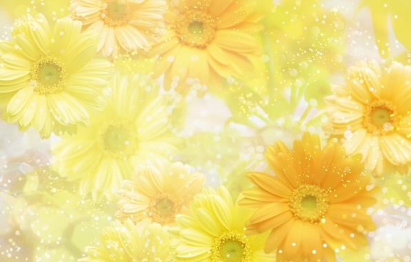 Picture flowers, yellow, background, yellow, flowers