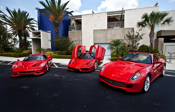 Picture red, palm trees, the building, Ferrari, red, Ferrari, 599, enzo, building, palm, f50