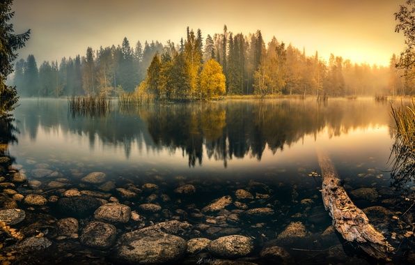 Picture autumn, forest, water, trees, fog, lake, reflection, the reeds, stones, dawn, morning, Tranquil Morning, Lauri …