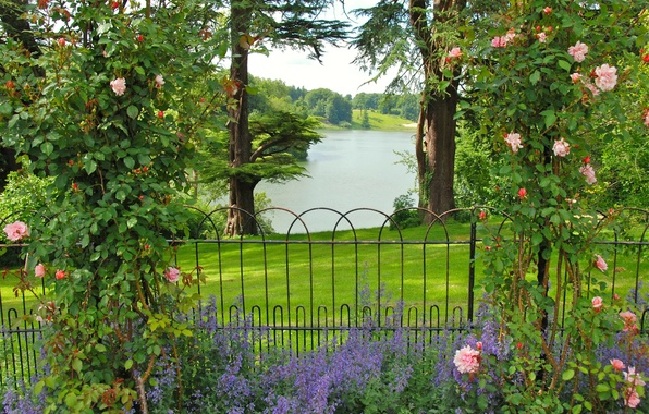 Picture greens, grass, trees, flowers, river, roses, garden, UK, the bushes, fence, Oxfordshire Gardens