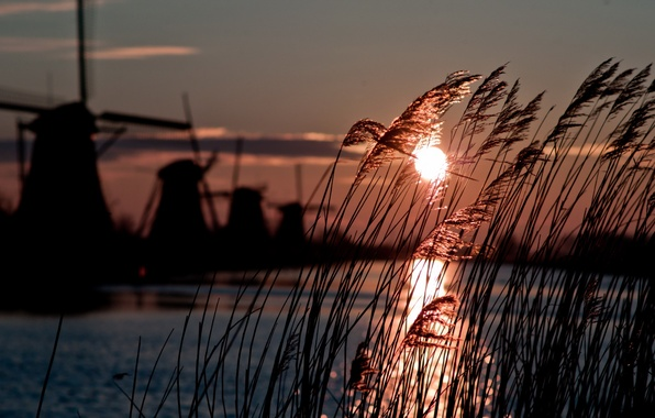 Picture winter, sun, windmill, cold, atmosphere, holland