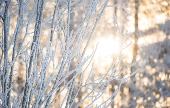 Picture winter, forest, light, snow, trees, branches, nature, The sun, beauty, Tomorrow dorffer