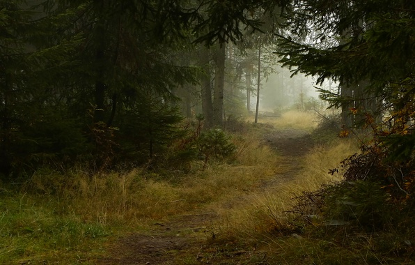 Picture autumn, trees, nature, fog, trail, Forest, ate, path
