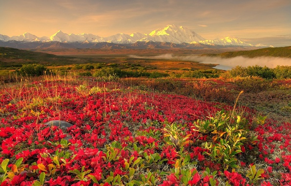 Picture flowers, mountains, fog, 152