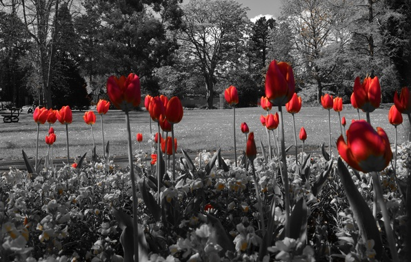 Picture trees, flowers, pond, Park, tulips, flowerbed, bench