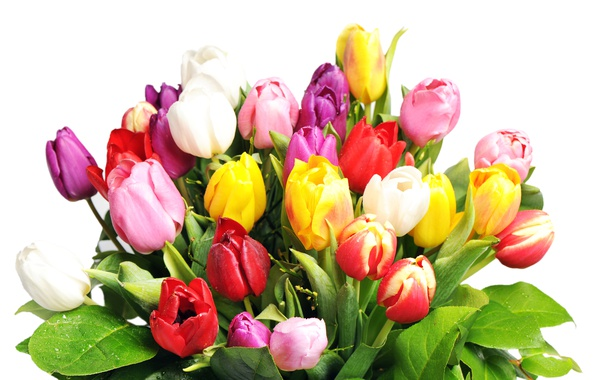Picture bouquet, tulips, white background, colorful, wet