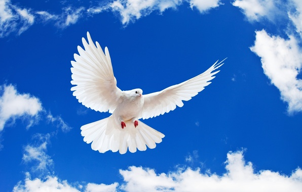Photo wallpaper white, the sky, dove, white dove