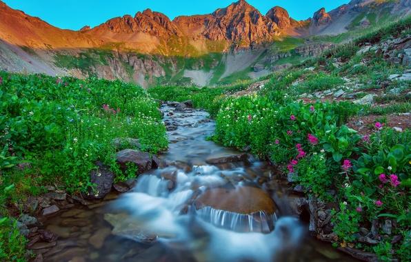Picture summer, flowers, mountains, nature, lake, stones, stream, morning, USA, San Juan Mountains, Silverton Colorado