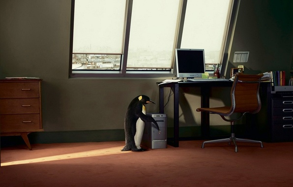 Picture computer, table, window, penguin