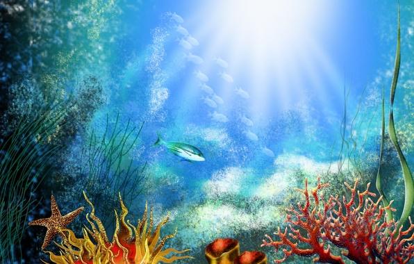 Picture fish, algae, corals, The bottom