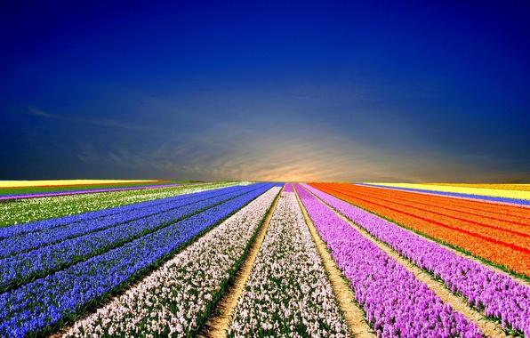 Picture field, landscape, flowers, nature, landscape, nature, field flowers, rainbow field, rainbow field