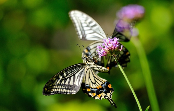 Picture flower, macro, butterfly, flowers, insects, nature, plant