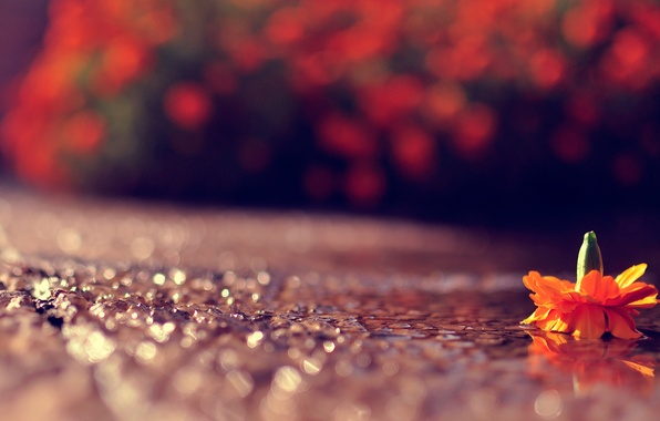 Picture road, flower, macro, light, glare, the game, bokeh