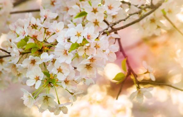 Picture macro, flowers, tree, branch, spring, flowering