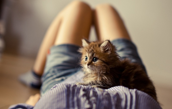 Picture girl, kitty, legs