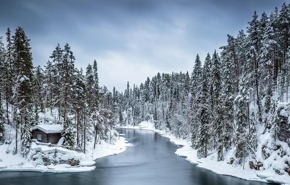 Picture winter, forest, house, river