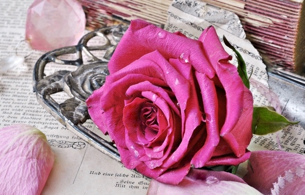 Picture style, pink, rose, books, old, petals, Bud, page, vintage