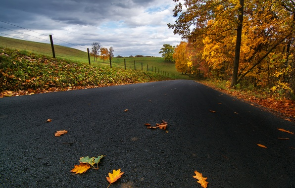Picture road, autumn, asphalt, leaves, clouds, trees, nature, field, yellow, USA, PA