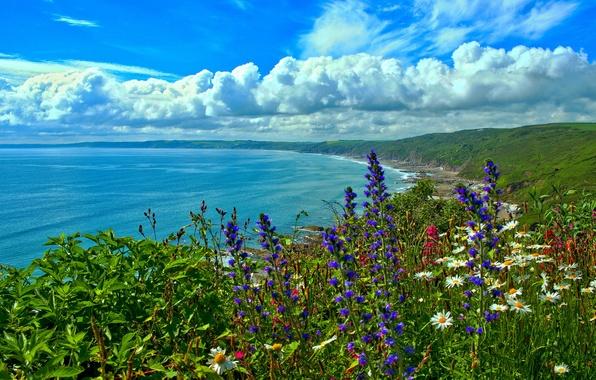 Picture sea, flowers, coast, Bay, England, Cornwall, Cornwall, Whitsand Bay, cloud England