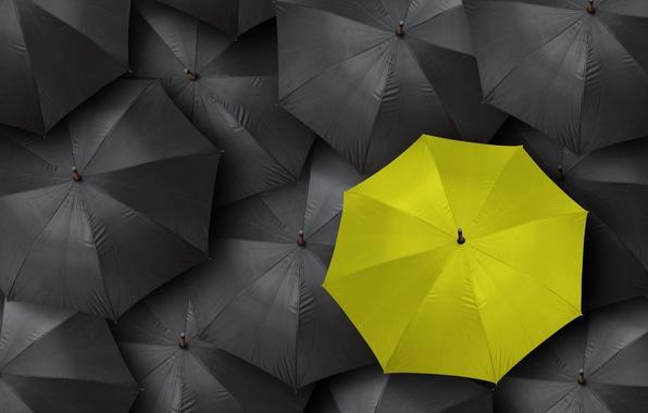 Picture black, yellow, umbrella