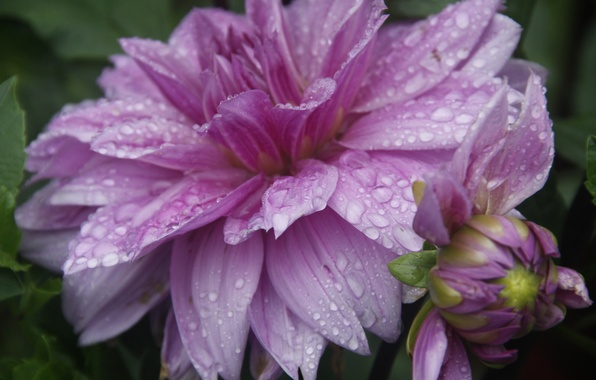 Picture flower, drops, macro, nature, background, rain, Wallpaper, plant, garden, village