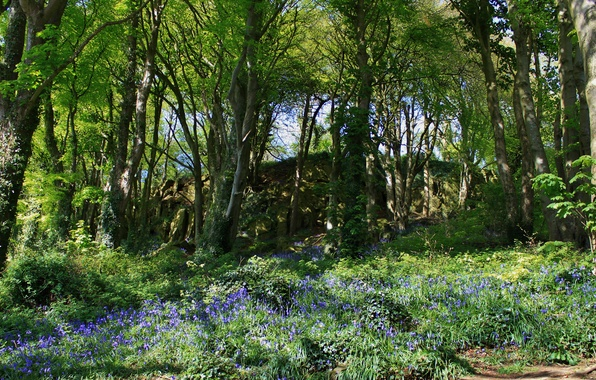 Picture grass, trees, flowers, Park, Ireland, Scrabo Country park