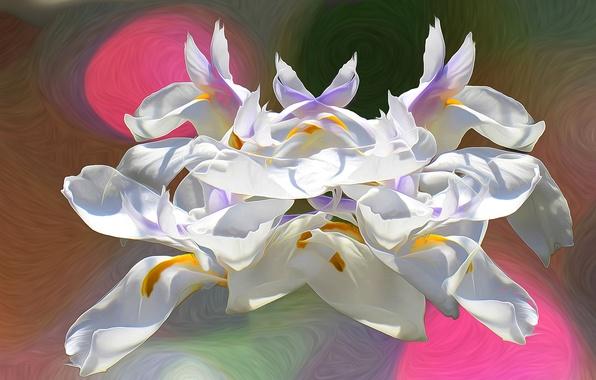 Picture line, flowers, paint, petals, inflorescence, touch