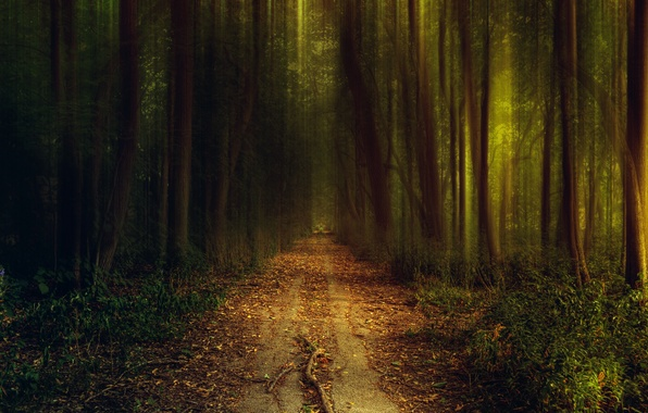 Picture road, greens, autumn, forest, grass, light, trees, nature, the evening, path, the bushes