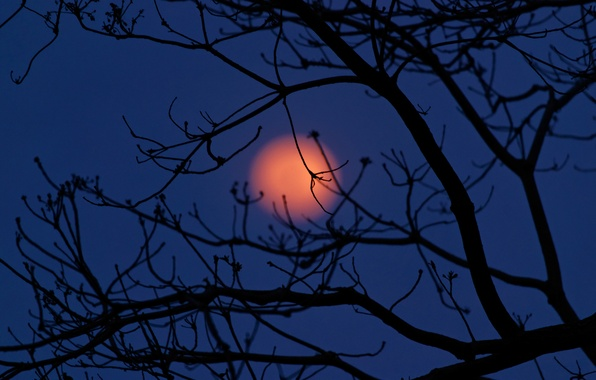 Picture the sky, clouds, night, tree, the moon, silhouette, Mexico, Tabasco
