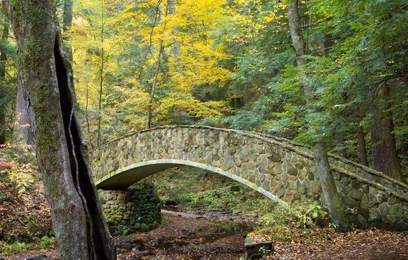 Picture autumn, forest, leaves, trees, landscape, bridge, Park, stream