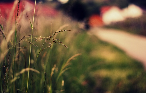 Picture greens, grass, macro, nature, background, widescreen, Wallpaper, plant, blur, spikelets, wallpaper, ears, nature, widescreen, background, …