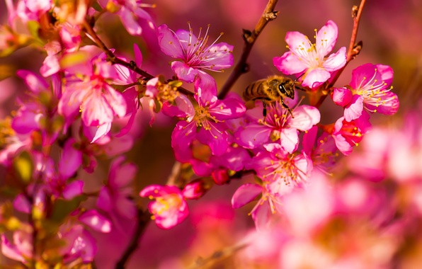 Picture macro, flowers, bee, spring, garden, insect