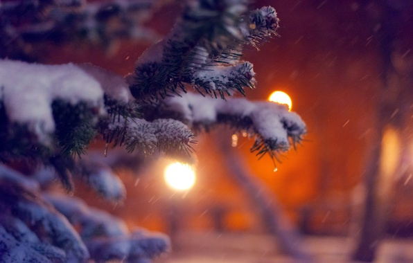 Picture winter, macro, snow, nature, lights, tree, tree, spruce, branch, the evening, tree