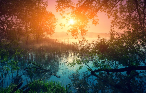 Picture forest, grass, the sun, trees, fog, river, the reeds, dawn, morning