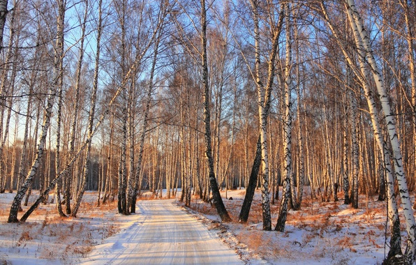 Picture winter, road, forest, snow, birch