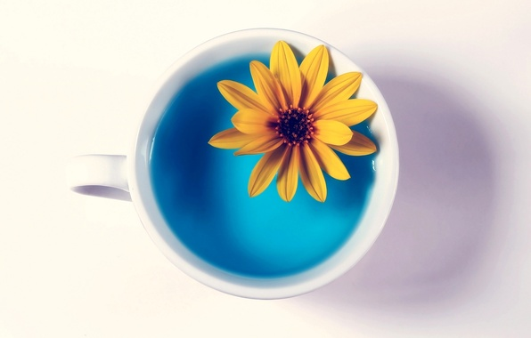 Picture flower, water, yellow, Cup, white background