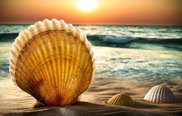 Picture sea, the sky, water, the sun, sunset, nature, background, widescreen, Wallpaper, wave, horizon, wallpaper, shell, ...