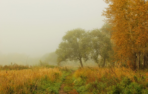 Picture autumn, forest, grass, trees, nature, fog, photo, path