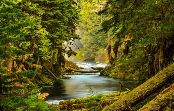 Picture forest, trees, nature, river, stones, moss, Oregon, McKenzie River