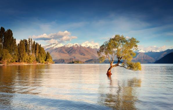 Picture water, mountains, tree, morning, New Zealand, South island, lake Wanaka