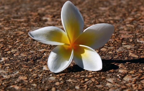 Picture earth, Petals