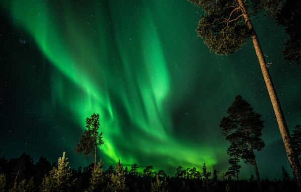 Picture forest, the sky, stars, trees, night, Northern lights, Finland