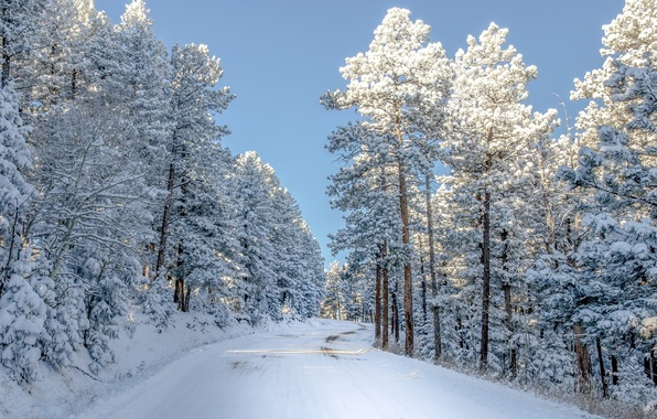 Picture winter, road, forest, the sky, snow, photo