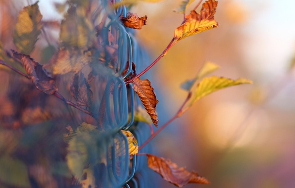 Picture autumn, macro, branches, mesh, foliage, the fence, bokeh